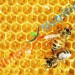 Beneficiile alimentelor produse de albine